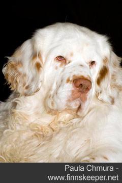 Dog portrait - Paula Chmura