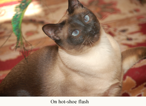 Mega Flip-it! on hot-shoe flash